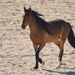 Equines - Photo (c) copper, some rights reserved (CC BY-NC)