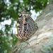 Mariposa Bonita - Photo (c) stelene2011, algunos derechos reservados (CC BY-NC-ND)