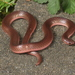 Eastern Worm Snake - Photo (c) jakescott, some rights reserved (CC BY-NC)