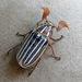 Escarabajo de Diez Líneas - Photo (c) Kim Wagner, algunos derechos reservados (CC BY-NC)
