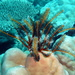 Feather Stars - Photo (c) sea-kangaroo, some rights reserved (CC BY-NC-ND), uploaded by sea-kangaroo