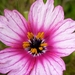 Butterfly Flower - Photo (c) Jacques van der Merwe, some rights reserved (CC BY-SA)