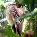 Urutaú Coludo - Photo (c) Carol Foil, algunos derechos reservados (CC BY-NC-ND)