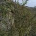 Caragana pygmaea - Photo (c) Natalya, algunos derechos reservados (CC BY)