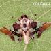 Syngamilyta apicolor - Photo (c) Eduardo Axel Recillas Bautista, algunos derechos reservados (CC BY-NC)