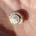 Geomitridae - Photo (c) Marina Nikonorova,  זכויות יוצרים חלקיות (CC BY-NC)