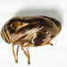 Clastopteridae - Photo (c) Steve Pelikan, alguns direitos reservados (CC BY-NC)