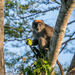 Tana River Red Colobus - Photo (c) Yvonne A. de Jong, some rights reserved (CC BY-NC)