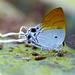 Zeltus amasa - Photo (c) Bernard DUPONT, algunos derechos reservados (CC BY-SA)