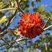 Mora de Papel - Photo (c) ivonnekellner, algunos derechos reservados (CC BY-NC)