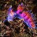 Flabellina - Photo (c) whodden, some rights reserved (CC BY-NC)
