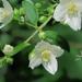 Plantas Vasculares - Photo (c) John Rusk, algunos derechos reservados (CC BY-NC-SA)