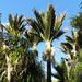 Nikau Palm - Photo (c) Katja Schulz, some rights reserved (CC BY)