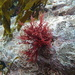 Ptilonia magellanica - Photo (c) mpalaciossubiabre, μερικά δικαιώματα διατηρούνται (CC BY-NC)