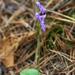Hemipilia cucullata - Photo (c) V.S. Volkotrub, algunos derechos reservados (CC BY-NC)