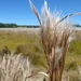 Bushy Bluestem - Photo (c) Forest and Kim Starr, some rights reserved (CC BY)