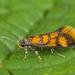 Promalactis procerella - Photo (c) Nikolai Vladimirov, algunos derechos reservados (CC BY-NC)