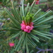 Quinquefoliae - Photo (c) V.H.S., μερικά δικαιώματα διατηρούνται (CC BY-NC-SA)