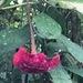 Palicourea correae - Photo (c) desertnaturalist, algunos derechos reservados (CC BY)
