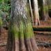 Ahuehuete Y Cipreses de Los Pantanos - Photo (c) Mary Keim, algunos derechos reservados (CC BY-NC-SA)