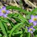 Anemonoides caerulea - Photo (c) Konstantin Samodurov,  זכויות יוצרים חלקיות (CC BY-NC)
