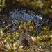 Salamandras Asiáticas - Photo (c) Kim, Hyun-tae, algunos derechos reservados (CC BY)