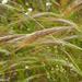 Stipellula capensis - Photo (c) Valter Jacinto, alguns direitos reservados (CC BY-NC-SA)