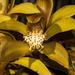 Orquídeas Barco - Photo (c) Vijay Anand Ismavel, algunos derechos reservados (CC BY-NC-SA), uploaded by Dr. Vijay Anand Ismavel MS MCh