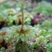 Hypopterygiaceae - Photo (c) Katja Schulz, algunos derechos reservados (CC BY)