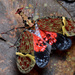 Dragon-headed Bugs - Photo (c) Geoff Gallice, some rights reserved (CC BY)