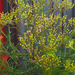 Hairy-legs Groundsel - Photo no rights reserved