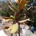 Beilschmiedia microphylla - Photo (c) Landy Rita, osa oikeuksista pidätetään (CC BY-NC)