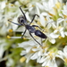 Camponotus angusticeps - Photo (c) Richard Adcock,  זכויות יוצרים חלקיות (CC BY-NC)