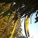 Billbergia zebrina - Photo (c) João Gava Just, μερικά δικαιώματα διατηρούνται (CC BY-NC)