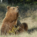 Holarctic Bears - Photo (c) camerondeckert, some rights reserved (CC BY-NC)