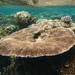 Corales de Astas - Photo (c) David Kidwell, algunos derechos reservados (CC BY-NC-SA)
