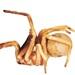 Sahastata sinuspersica - Photo (c) Pensoft publisher, μερικά δικαιώματα διατηρούνται (CC BY-SA)