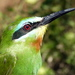 Blue-cheeked Bee-Eater - Photo (c) blackjohn, some rights reserved (CC BY-NC), uploaded by blackjohn