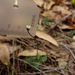Lagenophora gracilis - Photo (c) Wayne Martin, osa oikeuksista pidätetään (CC BY-NC)