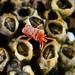 Microtrombidiidae - Photo (c) Lek Khauv, algunos derechos reservados (CC BY)