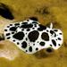 Αγελαδίτσα - Photo (c) jim-anderson, μερικά δικαιώματα διατηρούνται (CC BY-NC)