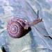 Polygyrinae - Photo (c) John Slapcinsky,  זכויות יוצרים חלקיות (CC BY-NC)