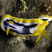 Streaked Chromodoris - Photo (c) jim-anderson, some rights reserved (CC BY-NC)