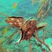 Pterioidea - Photo (c) Lesley Clements, algunos derechos reservados (CC BY-NC)