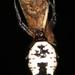 Araña Espinosa Blanca - Photo (c) Judy Gallagher, algunos derechos reservados (CC BY), uploaded by Judy Gallagher