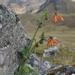 Nasa ranunculifolia cymbopetala - Photo (c) Lada Malek, algunos derechos reservados (CC BY-NC)