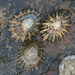Patella Limpets and Allies - Photo (c) Sandy__R, some rights reserved (CC BY)