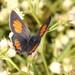 Strymon bicolor - Photo (c) Rigoberto Yáñez, some rights reserved (CC BY-NC)