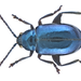 Metallic Flea Beetles - Photo (c) Udo Schmidt, some rights reserved (CC BY-SA)