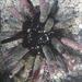 Eucidaris thouarsii galapagensis - Photo (c) Rebecca Johnson, algunos derechos reservados (CC BY-NC)